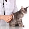 Ветеринарные клиники в Беломорске